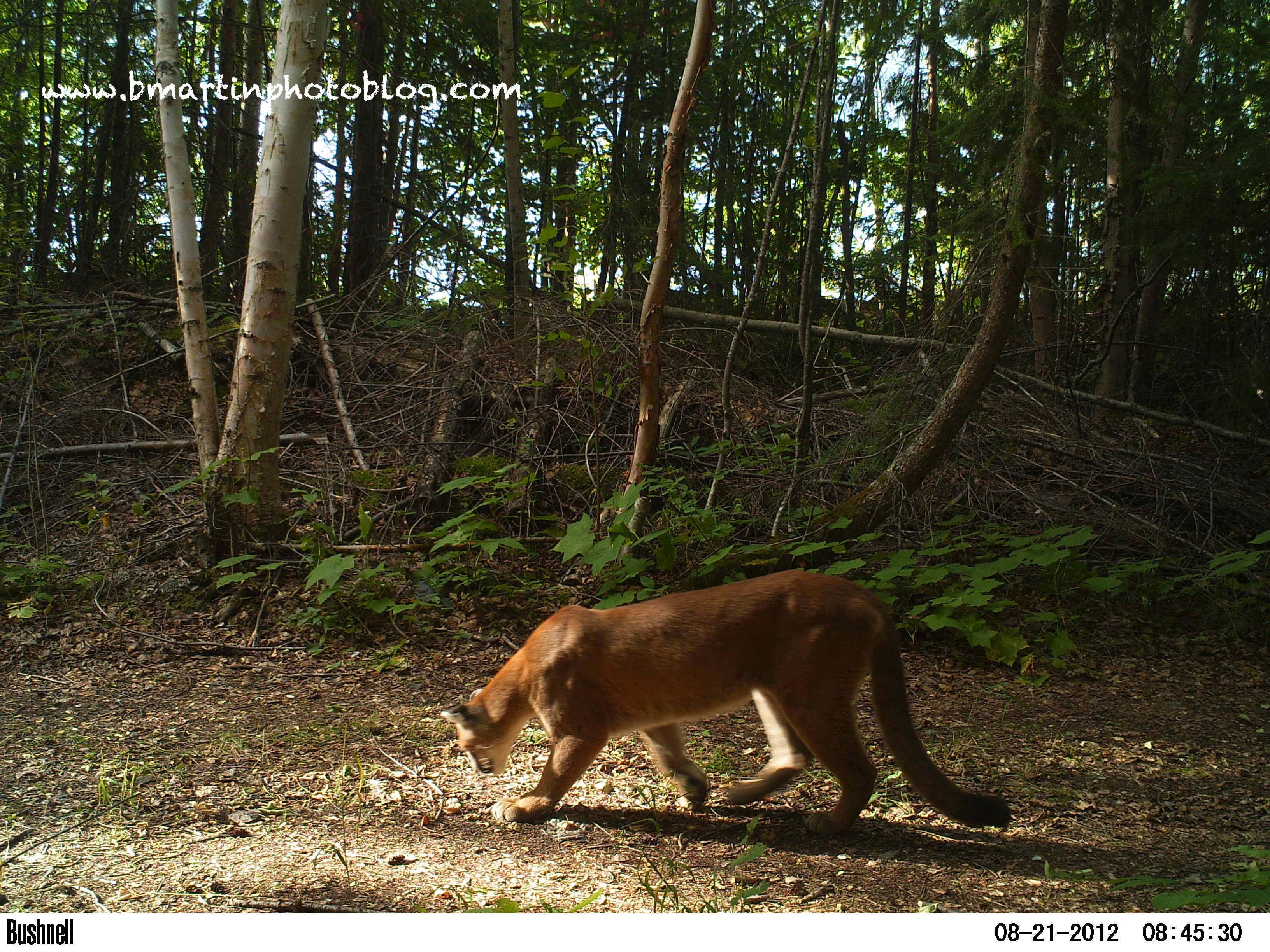 cougar amateur escorts tours