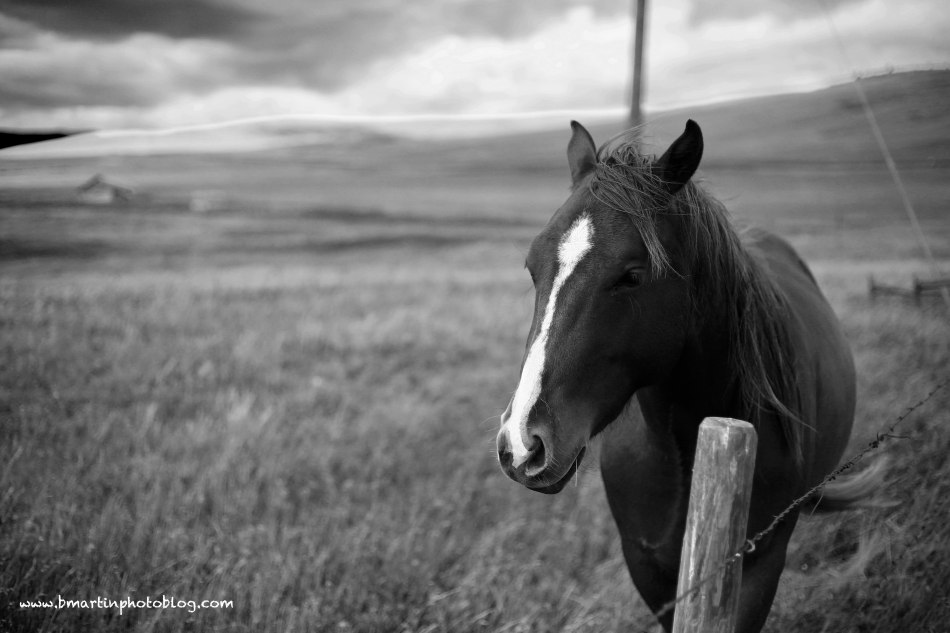 Horse in the Prairie Wind